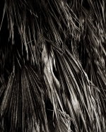 Palm ATO1.2