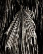 Palm ATO1